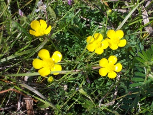 Wild flowers along the coastal waterway